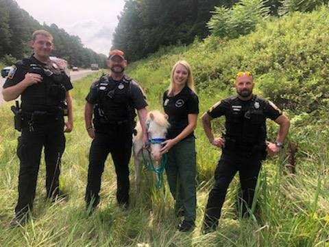 Police chase down escaped mini horse on busy Virginia road